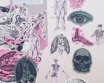 Vintage Style Anatomy Ephemeras