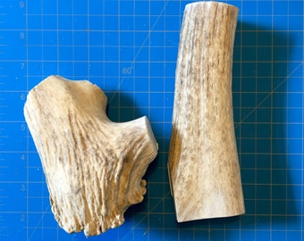 100% Natural Found Elk Shed Antler Dog Treats #8 - Large (2016)