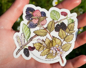 Botanical Stickers! Choose between Heart Beet and Berry Nice