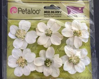 White Camelia Flowers by Petaloo