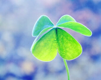 Digital Download Photography Clover