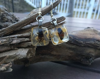 Preserved Bee Earrings