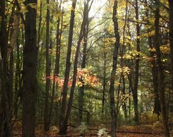 Fall Day 1