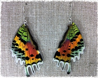Real Butterfly/Moth Wing Jewelry -Earrings - Iridescent Rainbow- sunset moth