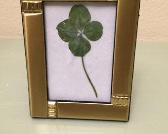 Framed Lucky Four-Leafed Clover