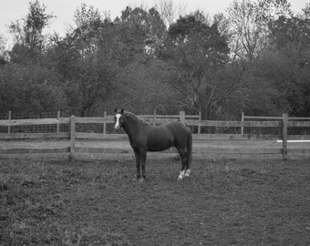Horsing Around, PHOTOGRAPHY, LANDSCAPE, WALL art, trees, nature, wood, picture, art