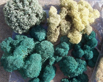 Preserved Reindeer Moss, mixed.  Lichen moss, floral arrangements, fairy gardens, flower pots, crafts.