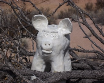White Pig in New Mexico