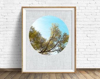 "nature photography, large art, large wall art, printable art, instant download printable art, nature prints, wall art prints - ""Reaching"""
