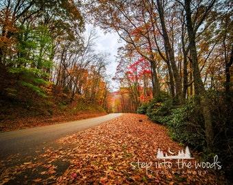 Blue Ridge Parkway Scenic Road; Landscape, Nature Photography, Blue Ridge Mountains, Autumn Leaves, North Carolina, Fall Trees