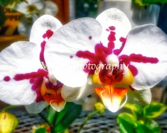 Orchids Prints - Photography - Orchids - Nature - Plant - Flower - Nature Photography