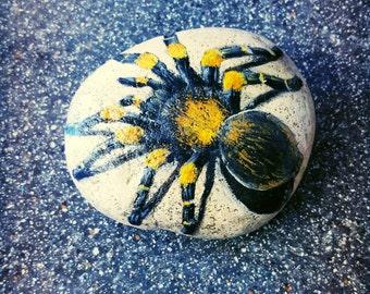 Painted Rock Tarantula