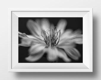 Flower photography, flower print, flower photo, floral wall art, flower art, flower wall art, floral photography, macro photography, digital
