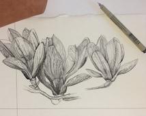 Magnolia Pen Drawing