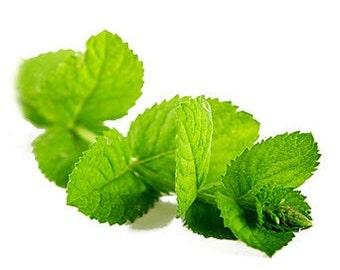 Organic Minty Sugar Scrub 8 oz