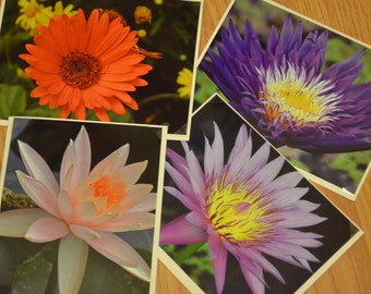 Lily Photo Notecard Collection