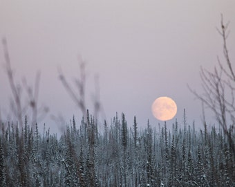 Moon - Moon Photo - Winter Forest - Forest Photo - Landscape - Winter - Digital Photo - Digital Download - Instant Download - Home Decor
