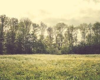 Spring Meadow - Meadow - Meadow Photo - Spring - Spring Photo - Green - Digital Photo - Digital Download - Instant Download - Spring Decor