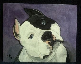 Pretty Please - Pit Bull portrait