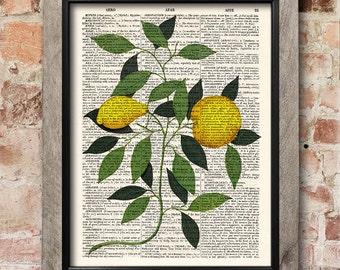 Lemons botanical print, dictionary art print, home decor wall art, kitchen decor, home art, vintage art, book art print, wall art [ART 001]