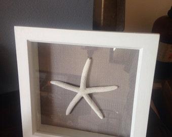 Real starfish in boxframe