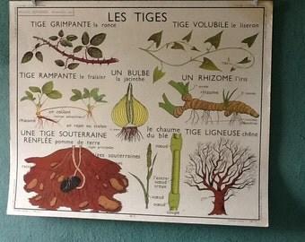 Pedagogical vintage shoots / roots