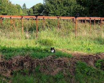 Cat enjoying a sunny day
