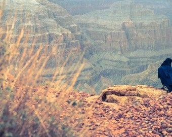 nature photography - red grand canyon with raven fine art print - nature print - wall art