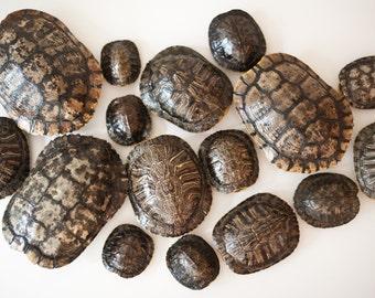 Natural Turtle Shells