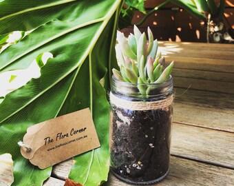 Vintage Style Succulents Jar