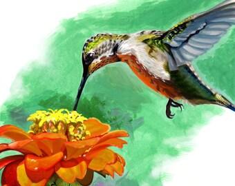 Hummingbird and Zinnia