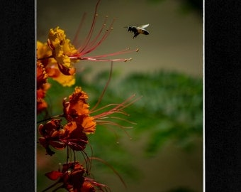 Photography Nature Bee and Flower