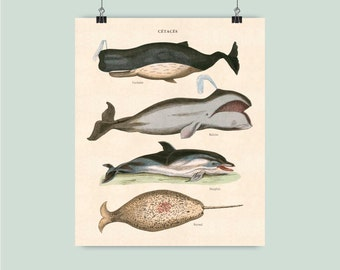 Nautical art, Nautical print, Whales Print, marine mammal, Seaside beach cottage decor, Educational poster, Vintage Instant download 20x24