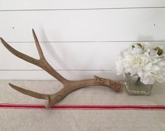 Real Vintage Deer Antler