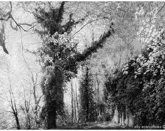 Forest, black and white, fine art photography, landscape photography, nature, fairytale, woods, woodland, trees, wall art, 002. 'untitled'
