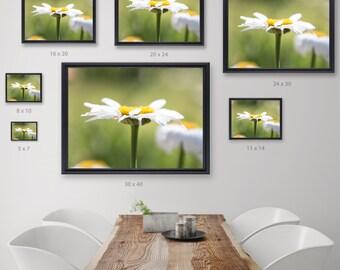Painterly Daisy Photograph, Fine Art Flower Photograph, Flower Photography, Wanderlust Photograph, Fine Art Print, Fine Art Photography