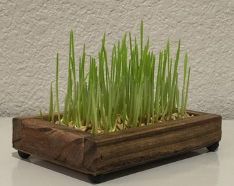 Decorative Wheatgrass Garden Standard