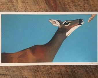 """Key Deer, 9""""x17"""", Fine Art Print"""