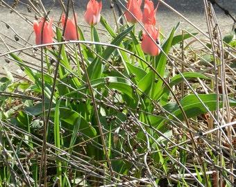 nature flower bird birds