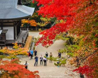 Autumn Colours Print, Fall Decor Ideas, Maple Leaves Photo, Living Room Decor, Home Decoration, Art Print Japan, Wall Art Decor, Standout