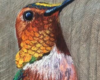 Merlin, male Roufous hummingbird 2
