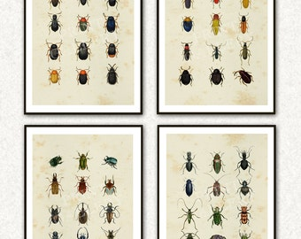 Insects Beetles Prints Entomology Book Pages Home Decor Prints Antique Pictures Old Bugs Fine Art Wall Decoration 031