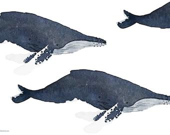 Humpback Whale, A4 print