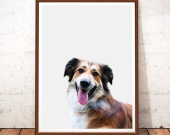 Australian Shepherd Print, Dog Prints, Australian Shepherd Photography, Instant Download, Dog Printable Art, Dog Print, Australian Shepherd