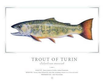 The Trout of Turin Print