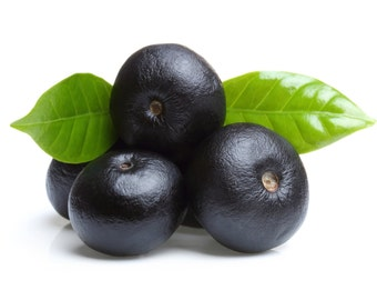Acai berries – powder