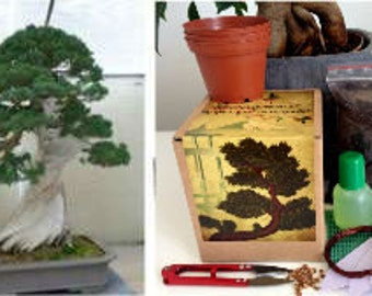 Chinese Juniper Complete Bonsai Growing Kit- 10 Pieces -Bonsai, gift for gardener