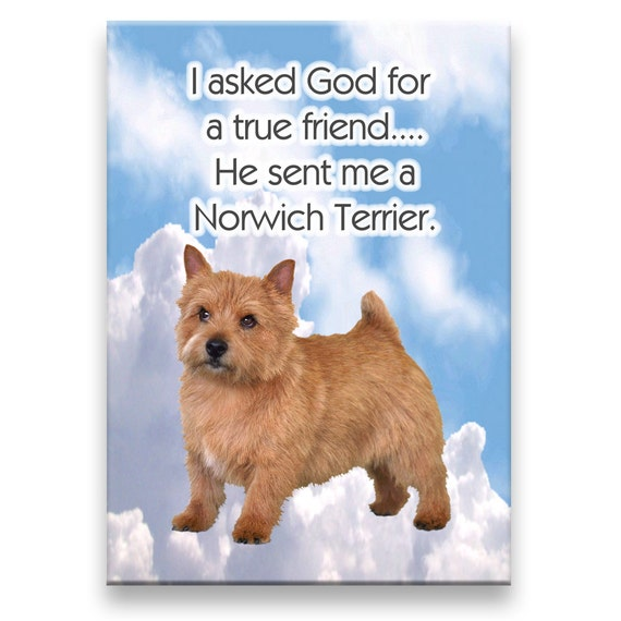 Norwich Terrier True Friend Fridge Magnet No 1