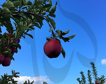 Blue Skies and Red Delicious