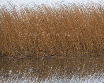 Reed Reflections #19